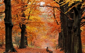 Picture autumn, forest, leaves, trees, nature, trail, Nature, falling leaves, trees, autumn, leaves, path, fall