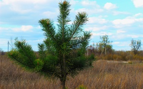 Picture the sky, grass, needles, spruce