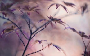 Picture leaves, blur, Flying leaves