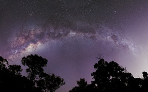 Picture space, stars, trees, the milky way