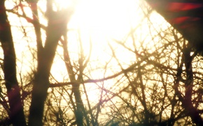 Picture the sun, trees, branches, magic, bright, Glow