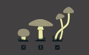 Picture mushrooms, icons, hallucinogens