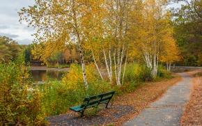 Picture autumn, trees, nature, Park