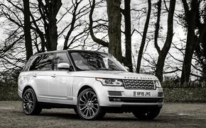 Wallpaper sport, Land Rover, Range Rover, Sport, land Rover, range Rover