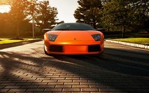 Picture flowers, orange, shadow, Lamborghini, pavers, Blik, Lamborghini, Murcielago, orange, Lamborghini, murciélago