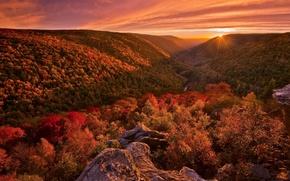 Picture autumn, forest, landscape, sunset, paint, light. nature