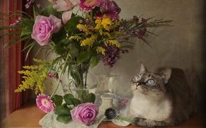 Picture cat, look, flowers, rose, bouquet