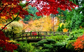Picture autumn, leaves, trees, bridge, nature, yellow, green, red, wooden