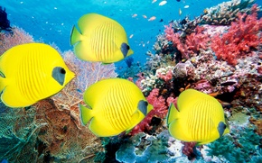 Wallpaper sea, fish, fish, corals, underwater world