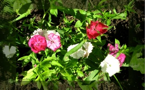 Picture greens, summer, leaves, light, flowers, shadow, flowerbed