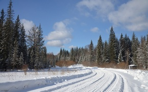 Picture winter, road, forest, snow, nature, photo, spruce, turn