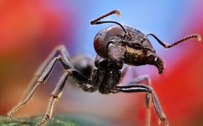 Picture macro, large, ant
