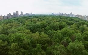 Wallpaper trees, Park, the city