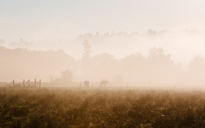 Picture fog, horses, morning