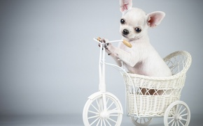 Picture bike, dog, puppy, puppy, Bicycle, the dog