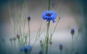 Picture flower, macro, fog, plant, meadow
