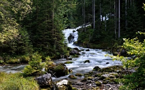 Picture forest, trees, stream, stones, moss, stream, Austria, thresholds, coniferous, Hallstatt, Hallstatt