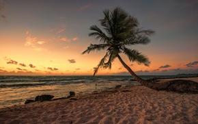 Picture beach, Palma, bird, the evening, Mexico