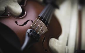Picture violin, strings, tool