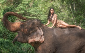 Picture summer, look, girl, face, elephant, dress, legs, beauty, trunk