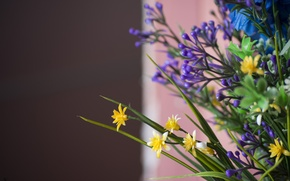 Picture macro, flowers, blue, yellow, bouquet, brown