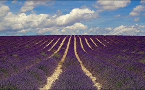 Picture field, flowers, France, lavender, Provence