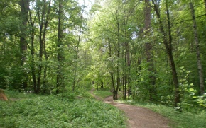 Picture road, forest, summer, trees