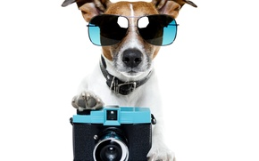 Picture dog, glasses, the camera, dog, glasses, phone, Jack Russell Terrier
