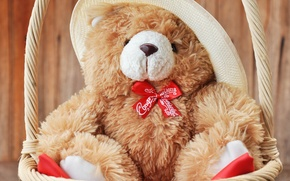 Picture bear, toy, bear, cute, Teddy