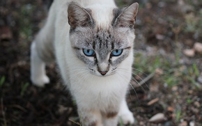 Picture city, love, sky, landscape, blue, eyes, cat, dog, pretty, beauty, animal, cats, cute, countryside