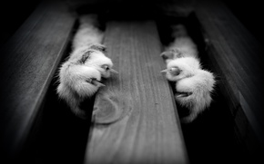 Picture animals, cats, paws, black and white
