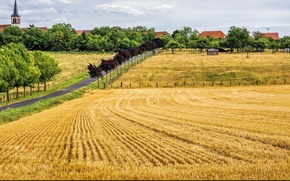 Picture road, trees, field, Summer, summer, road, trees, the ranks, fields