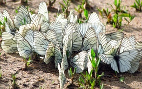 Picture GRASS, WINGS, BUTTERFLY, EARTH, INSECTS, MOTHS