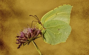 Picture flower, nature, style, background, butterfly