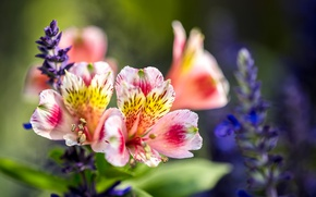 Picture macro, flowers, nature
