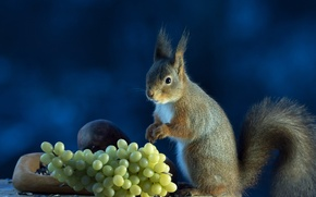 Picture background, protein, grapes, grey