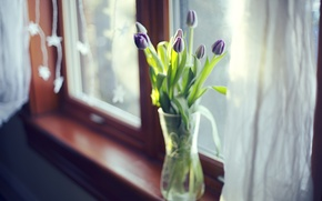 Picture leaves, flowers, tulips, vase