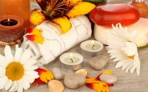 Wallpaper flowers, stones, chamomile, candles, petals, soap, shell, towels, Spa