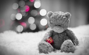 Picture gift, bear, bear, fur, bokeh, sad