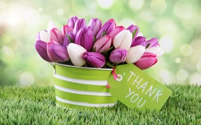 Picture flowers, spring, tulips, bokeh