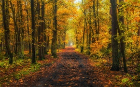 Picture road, autumn, forest