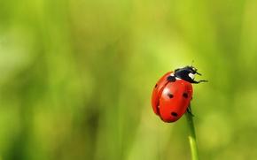 Picture macro, green, background, ladybug, beetle