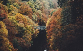 Wallpaper autumn, trees, nature, river