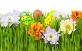 Picture grass, flowers, eggs, Easter, Easter