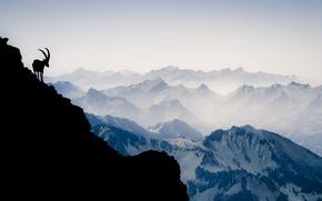 Picture mountains, mountain, Switzerland, silhouette, Alps, mountain goat, Vanilla Noir