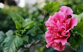 Picture summer, flowers, garden