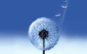 Wallpaper blue, background, dandelion, Galaxy, Samsung