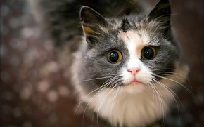 Picture cat, eyes, mustache, look