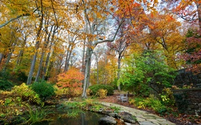 Picture autumn, trees, nature, pond, Park, photo, USA, Longwood Kennett Square