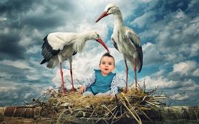 Picture birds, child, storks